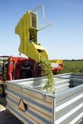 Grape harvesting machinery Stock Photos