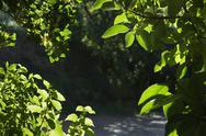 Stock Photo of Foliage detail