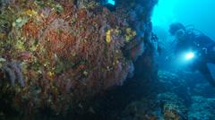 Underwater footage red coral diver corsica corse mediterranean Stock Footage
