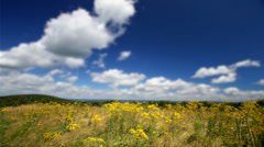 Goldenrod  in field clouds - stock footage