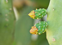 cactus with a flower and sharp thorns - stock photo