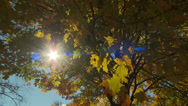 Stock Video Footage of sun shines through colorful autumn leaves