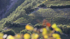 vineyard close-up - stock footage