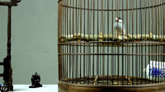 The stationary and toy of the Chinese people in old times,include Java Sparrow Stock Footage