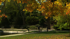Colorful autumn leaves falling in a park Stock Footage