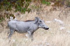 Etosha-Nationalpark, Namibia Stock Photos