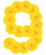Number 9 made from dandelion flower Stock Photos