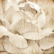 Grunge wooden texture with floral background Stock Photos