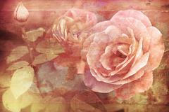 Grunge texture with floral background in vintage style. romantic pink roses Stock Photos