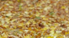 Autumn Blonde Girl Stock Footage