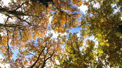 Autumn in the treetops Stock Footage