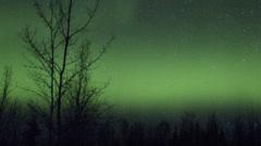 Alaska Aurora Borealis through trees Stock Footage
