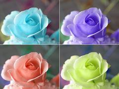Popart roses - stock illustration