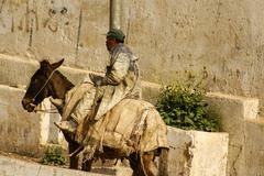 mule at the streets of fez medina, morocco - stock photo