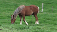 Stock Video Footage of Horse Grazing, Horses, Farm Animals