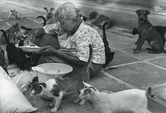 Feeding strays in Thailand Stock Photos