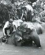 Stock Photo of Elephant in Thailand