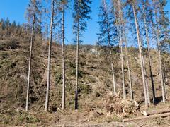 Tuhoutunut hurrikaanin metsä Kuvituskuvat
