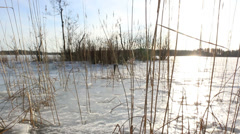Sun shining brightly through reeds at shore in springtime Stock Footage