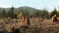 Clear Cut Forest Tree Stumps Washington State Stock Footage