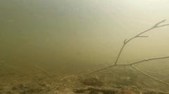 Underwater pond frog view Stock Footage