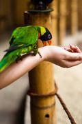 Parrot syö kädestä tyttö Kuvituskuvat