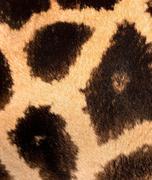 Authentic animal wool texture Stock Photos
