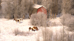 Horses Grazing Steamboat Springs Stock Footage