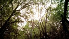 Jungle Canopy POV View Through - stock footage
