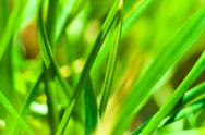 Stock Photo of Closeup of fresh green grass with selective focus