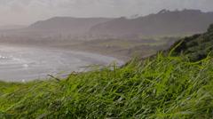Medium shot view of Murawai beach - windy grass,woods and ocean Stock Footage