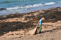 soil enriching - seaweed - stock photo