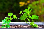 Stock Photo of Fresh green plant against blurry abstract background