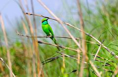 The Little Green Bird - stock photo