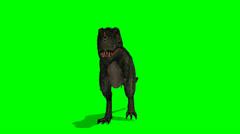 Dinosaur Tyrannosaurus T-Rex walks - green screen Stock Footage