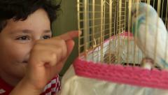 Little boy likes  budgie - stock footage