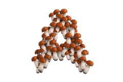 Boletus mushroom letter A on white background - stock illustration