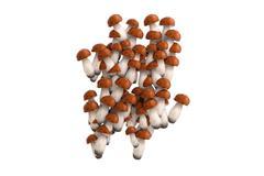Boletus mushroom symbol # on white background Stock Illustration