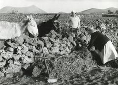 Malta farming, 1960s - stock photo