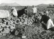 Malta farming, 1960s Stock Photos