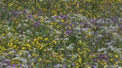 Field flowers swaying in a summer breeze Stock Footage