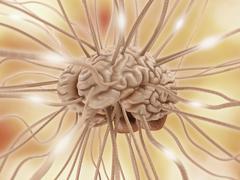 Brain connections - stock illustration