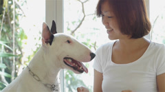 Asian woman and her bull terrier dog looking on tablet. Stock Footage