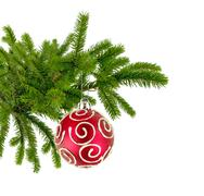christmas tree branch with red decorate ball isolated on white - stock photo