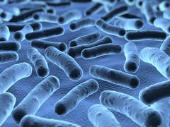 Bacteria seen under a  scanning microscope Stock Illustration
