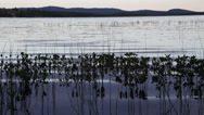 Stock Video Footage of Ripples in a lake at evening