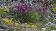Wild flowers growing on a rock Stock Footage