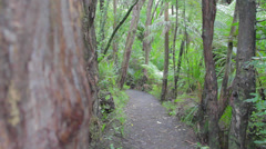 Middle of the trail to cascade falls waitakere ranges Stock Footage