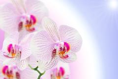 spotted orchid flower on natural gradient - stock illustration