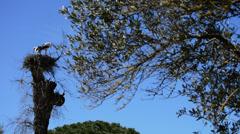 Storks in nest in preserve Stock Footage